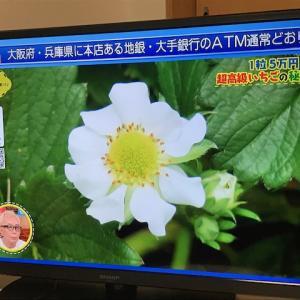花びら9枚・・一粒五万円・・我が家花びら5枚