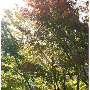 お庭の紅葉も始まっています。