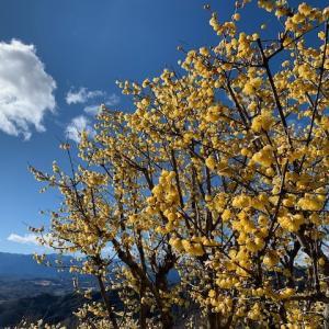 【番外】初春の秩父紀行