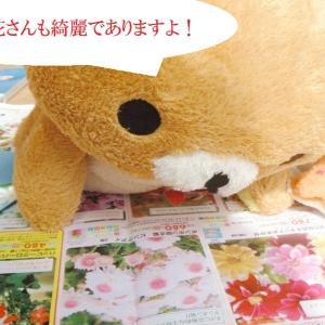 百日草さんの種さんがやって来たであります!