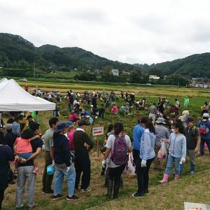 大盛況の報告:葉山島落花生収穫祭2019
