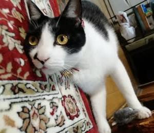 8月8日は 世界猫の日🐈世界中の猫ちゃんに幸あれ❤