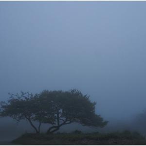 霧にたたずむ