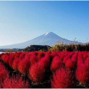 富士山とコキア