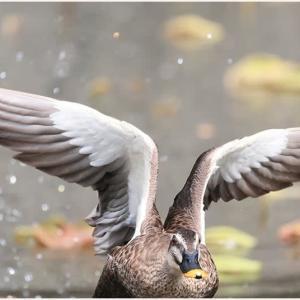 それぞれの時…野鳥