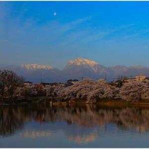 水面に映る桜と山々