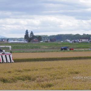 農村の風景-稲刈り