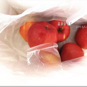 リンゴいただきました~♪
