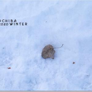 冬の落ち葉/画像検索のカメラマーク