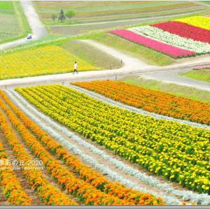虹のお花畑 「色彩の丘」