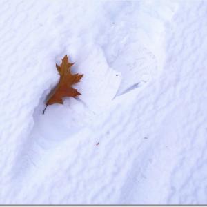 雪と風と足跡と・・・/映画「キャッチ・ミー・イフ・ユー・キャン」