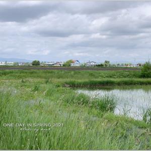春・・・近郊の田んぼと畑