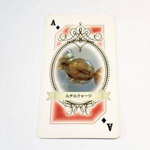 今日のパワーストーンカードからのメッセージ!(7月24日)
