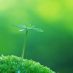 6/21 夏至・蟹座新月・日蝕 エネルギー調整中〜変化のエネルギーはどこからくる?