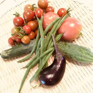 おうちファームが豊かです〜ドライトマト&干しきゅうり漬け 夏バテにも効果的