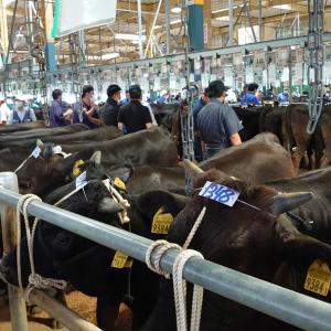 子牛の市場