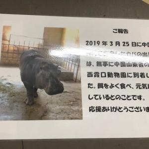 西霞口動物園のパンダのお母さん