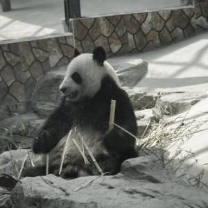 劉公島のパンダ