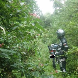 出雲市近辺の林道に案内される