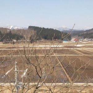 ギフチョウ属情報2014 鮭川村
