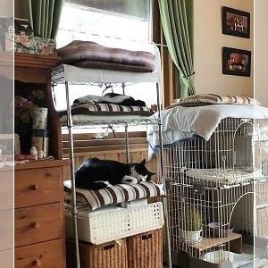 久しぶりに猫の棚にお客さま