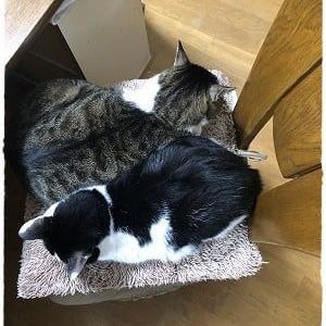 二人用の椅子