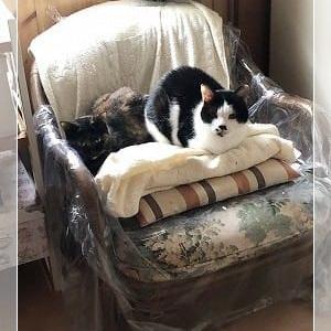 被害にあった椅子