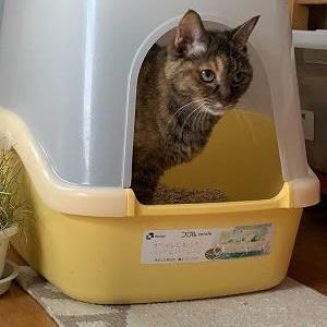 今週は猫トイレのお手入れ