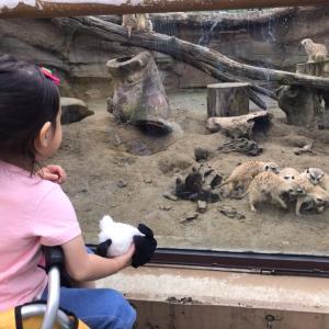 ついに動物園に行く