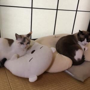 最近の猫と娘