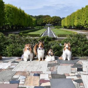 ひさしぶりの昭和記念公園。