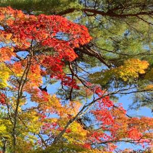 ひと足早く秋色に包まれて