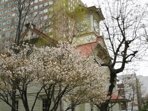 2021年4月24日、25日 札幌桜めぐり