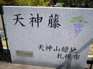 天神山緑地、中島公園の花々(2021年6月6日)