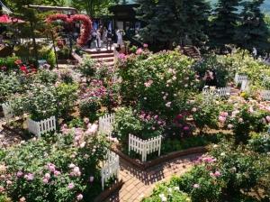 白い恋人パークのバラ(2021年6月26日)