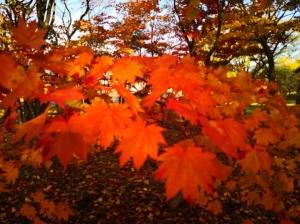 真駒内公園の紅葉(2021年10月17日)