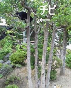 猫たちの近況 ~張り切りチビと、横着シマと、甘えん坊クロ~