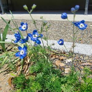 実家の庭の花たち
