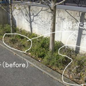 実家庭の庭木剪定