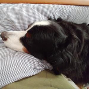 Leaning Dog
