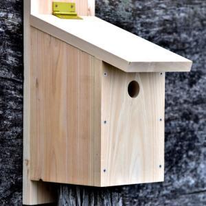 シジュウカラの巣箱作り