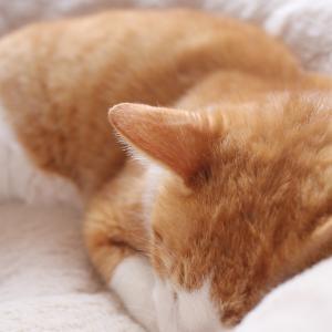 CANON LENS EF 35mm/F2を久しぶりに使って撮影した我が愛猫のボスちゃんです(^^ゞ
