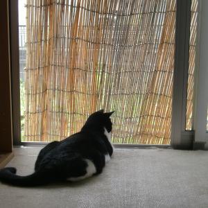 黒白猫のムーちゃん画像、今回は大量掲載であります'20枚掲載!)(^^)/