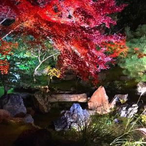 綺麗すぎる圓徳院 紅葉ライトアップ