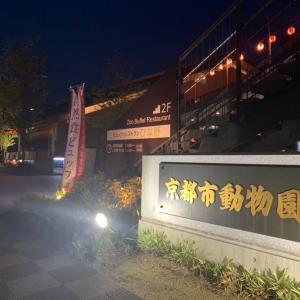 京都市動物園秋の夜間開園