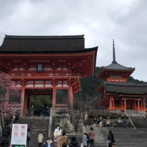 京都観光地の現状(去年と比較)