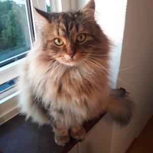 猫のルドルフ、お引越し