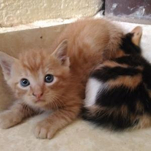 子猫が産まれて。
