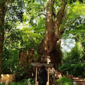 来宮神社の大楠を護れ。