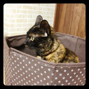 サビ猫photo(・∀・)
